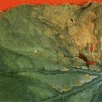 黄瓜作物上细菌性枯萎的实例。