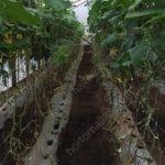 A rede para tutorar HORTOMALLAS oferece grandes vantagens ao cultivo de pepinos em estufas, dado que reduz o contacto com as mãos e, portanto, a possibilidade de contágios de patógenos.