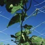 作物栽培中支撑南瓜 HORTOMALLAS是针对传统线绳的最佳选择