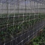 A malha treliça HORTOMALLAS, de fileira dupla, para o cultivo de pimentos em estufa.Este tipo de instalação reduz a incidência de transmissão mecânico de agentes patogénicos.