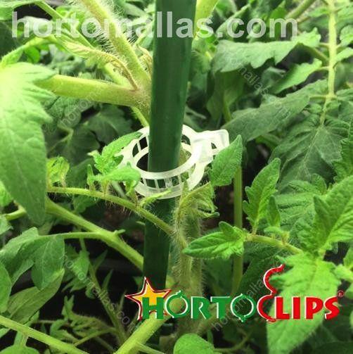 L' anello di sostegno permette fissare i nuovi rami della pianta al sistema di sostegno giá presente.