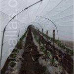 Aqui está um exemplo de instalação de tutorado num macro túnel de tomates.