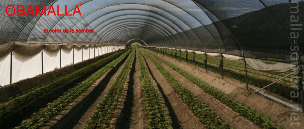 Malha/Rede de sombra OBAMALLA® instalada em uma casa de sombra em forma de túnel.