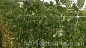 النباتات مع ميزات الزاحف من أجل أفضل نظام الدعم في شبكة تعريشة.