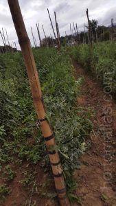 كما ان يمكنك مشاهدة التفاصيل بداية من ربط الاقطاب الى نهاية الجذور و يمكنك روية النمو الطبيعي للنباتات