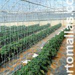 وفي النباتات المزروعة باستخدام شباك العرائش في صفوف مضاعفة وبهذا فإنّه ينصح بالنبات المدعوم من كلا الاتجاهين بالأخاديد.
