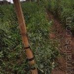 每排作物末端立柱安插细节,你可以看到植物在均匀生长。