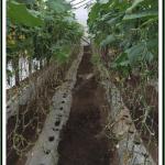 作物支撑网的使用对蔬菜栽培很重要。