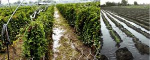 HORTOMALLAS file ağı kullanmak, ürünlere daha iyi bir destek sağlamasıyla meyve ağırlığı veya fazla nem nedeniyle meydana gelen kırılmaları engelleyerek bitkilerin yoğun yağışlarla hırpalanmasının önüne geçebilir.