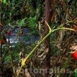 Влияние шквальных порывов ветра на растения томата обыкновенного (lycopersicum esculentum)