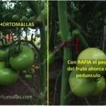 Ao contrário do sistema de fio de tutoragem, que pende aglomerados de tomate, HORTOMALLAS pode actuar como um suporte ao peso do tomate