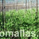 棚架网为豆科植物提供了支撑系统,使其打破了自身条件限制,并能够攀爬生长。这使杂草再也无法妨碍作物生长。