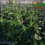 Rede HORTOMALLAS® para plantas.