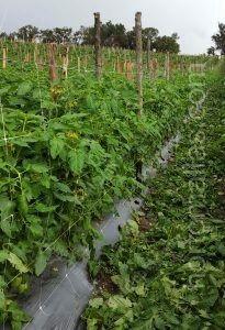 Опорные сетки облегчают выполнение сельскохозяйственных задач, что, в свою очередь, уменьшает механический стресс.