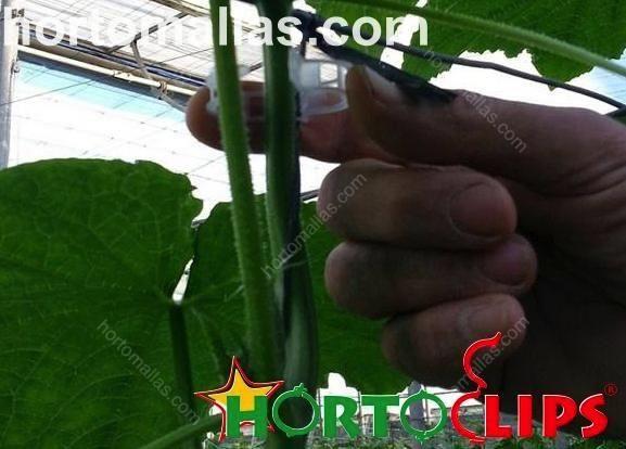O anel tomateiro facilita a guia de crescimento de ramos jovens