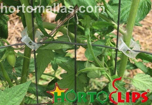 Sujeita a planta à malha com o clipe, para o tomate, sem necessidade de entrelaçar