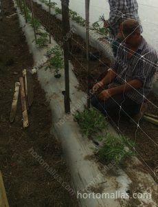 trabalhos agrícolas