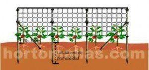 الشبكات الإرشادية مثالية لزراعة القرعيات والباذنجانيات . زيادة الغلة الخاص بك بنسبة 30% مع شبكة دعم الجدران. تدريس شبكة دعم الحوائط المزدوج يقلل الضغط الميكانيكي على النباتات و سرعة إنتشار الأمراض النباتية.