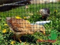 CHICKENMALLA Poultry Netting