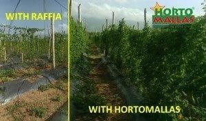 酒椰(raffia)系统 vs,HORTOMALLAS 支撑网对比