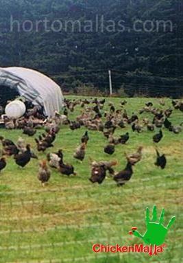 Tela gallinera para aves de corral.