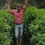 Il sistema di tutoraggio di pomodoro in campo aperto o in tunnel permette alla pianta di crescere piú vigorosa.