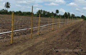 Rete per cetrioli HORTOMALLAS in una piantagione di cetrioli.
