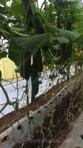 Salatalık terbiye filesi seralarda sırık çeşitlerinin yetiştirilmesinde yaygın olarak kullanılır.