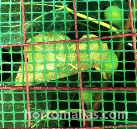 Malla para jardin plastica