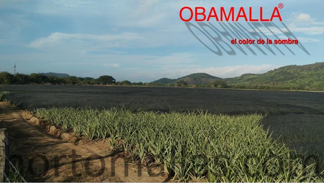 BENEFICIOS DE LA AGRICULTURA PROTEGIDA CON MALLA SOMBRA EN AGAVE AZUL