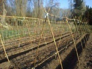 """竹子或棍棒搭建的倒""""V""""型帐篷"""