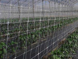 Le reti per serra HORTOMALLAS sono disponibili in misure d'altezza adeguate per il loro uso in serra.