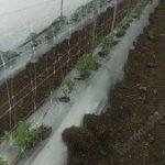 La rete per tutoraggio di ortaggi é eccellente per la fitosanitá della coltivazione.