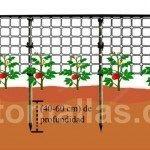 As plantas são melhor suportadas com a malha/rede treliça