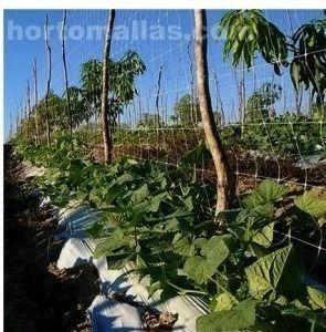L'uso della rete per spalliere permette ridurre la mano d'opera e rende piú efficienti le attivitá di potatura e raccolta.