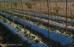HORTOMALLAS come rete di sostegno per cetrioli.