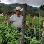 Com HORTOMALLAS você pode tutorar e seus cultivos crescerão verticalmente