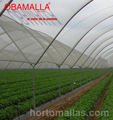 EFECTOS DEL GRADO Y DE LA PERMANENCIA DE LA SOMBRA SOBRE LA CALIDAD DEL TOMATE EN INVERNADERO