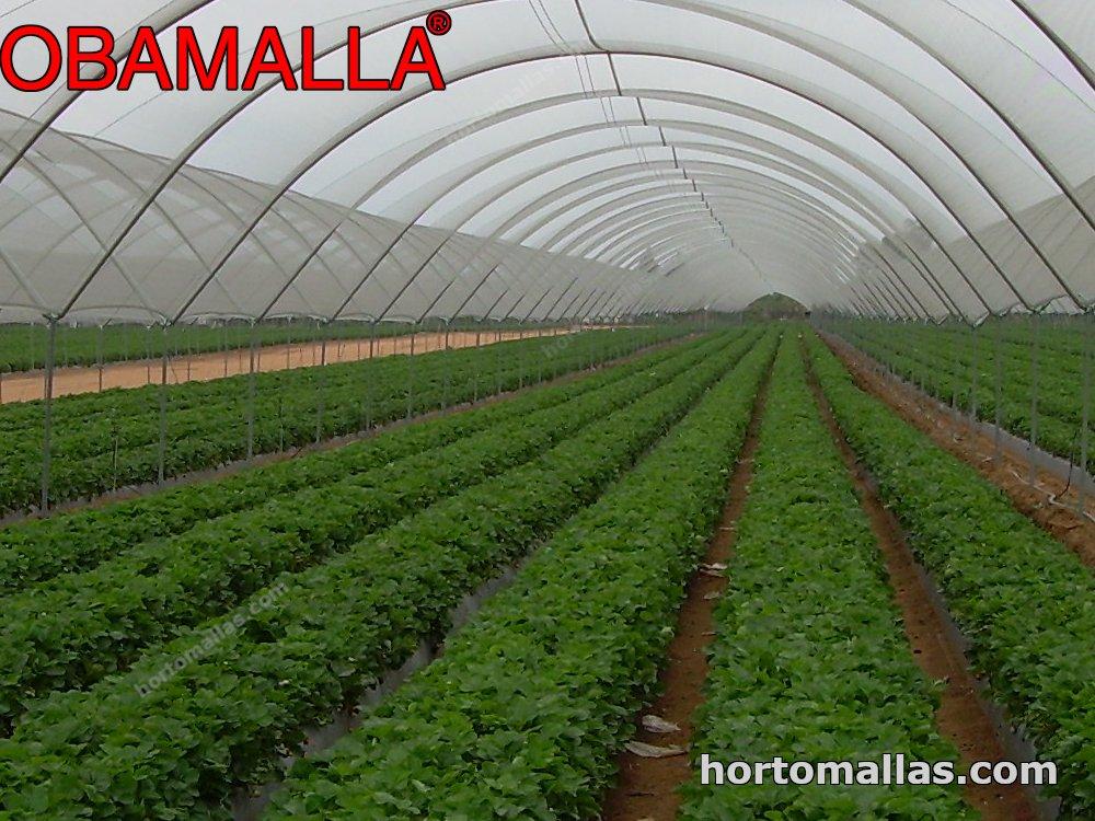 Efectos del grado y de la permanencia de la sombra sobre la calidad del tomate en invernadero.