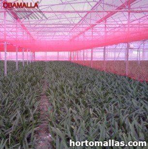 A malha/rede de sombra OBAMALLA® é um auxiliar muito adequado para proteger os cultivos do sol.