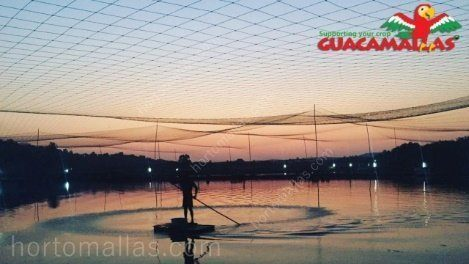 Netting is the only solution for effective avian bird control