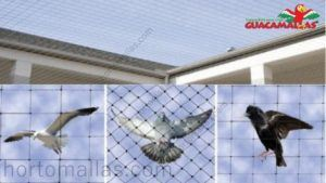 Problematic birds stopped by avian bird control net, and rooftop protected with anti- bird net