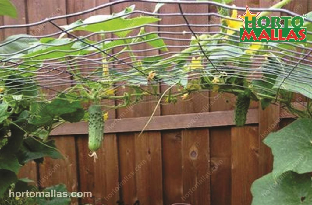 Choosing a Trellis Support System in an Orchard For Climbers