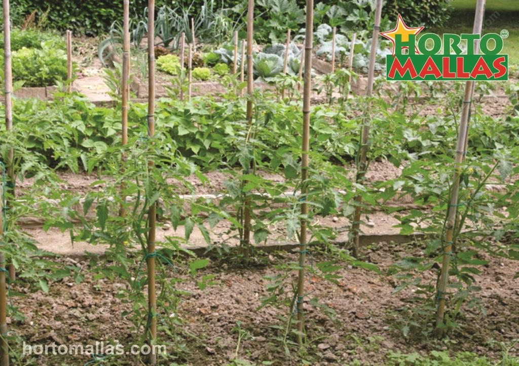 5 Reasons You Should Consider Staking Plants - HORTOMALLAS