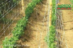 double row of pea netting