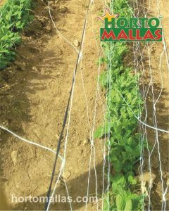 espalier support net used in cropfield