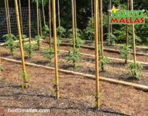 bambu tomato stakes