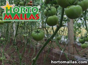 Tomato Support