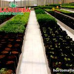 Ground cover blanco