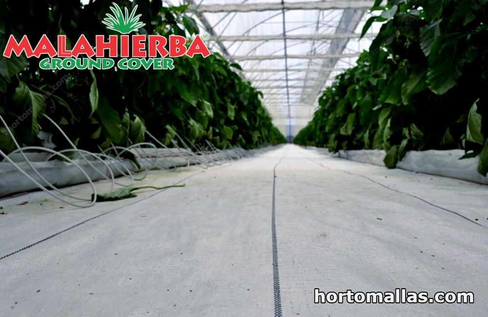 la difusión de la luz tiene grandes ventajas para el crecimiento de la planta.